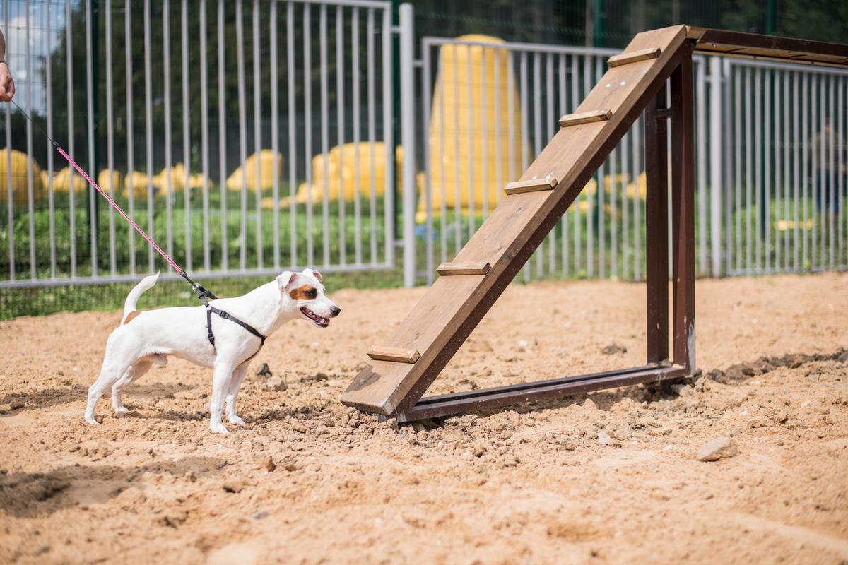 В Твери может появиться первая площадка для выгула собак - новости Афанасий