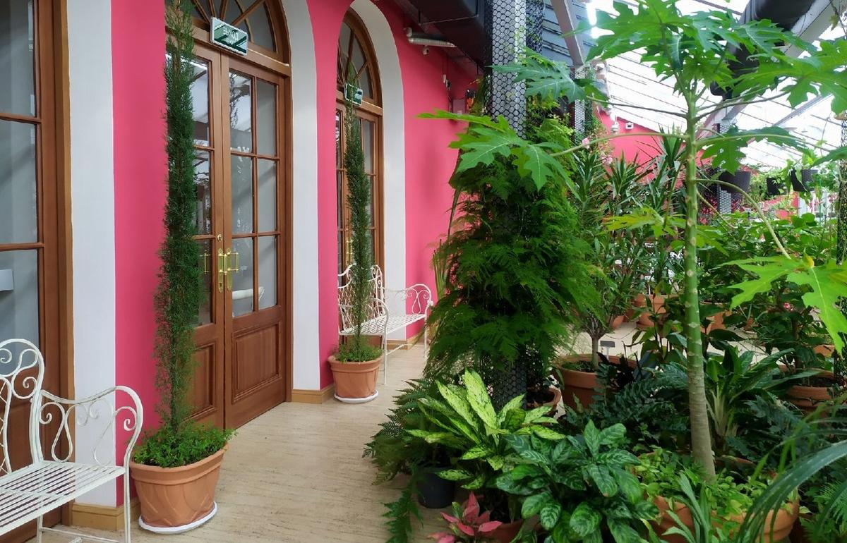 Зимний сад оранжереи Тверского императорского дворца открыт для посетителей - новости Афанасий