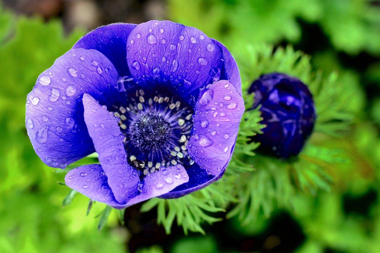На сайте ФГБУ «Госсорткомиссия»  размещены характеристики сортов овощных и цветочных растений, прошедших государственное сортоиспытание - новости Афанасий