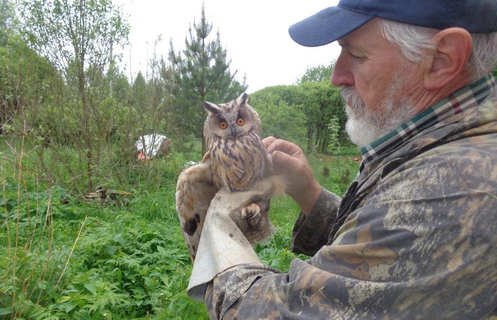 Ушастая сова делает «Кррр!». Зоологи показали спасенную в Тверской области птицу спустя 2 месяца - новости Афанасий