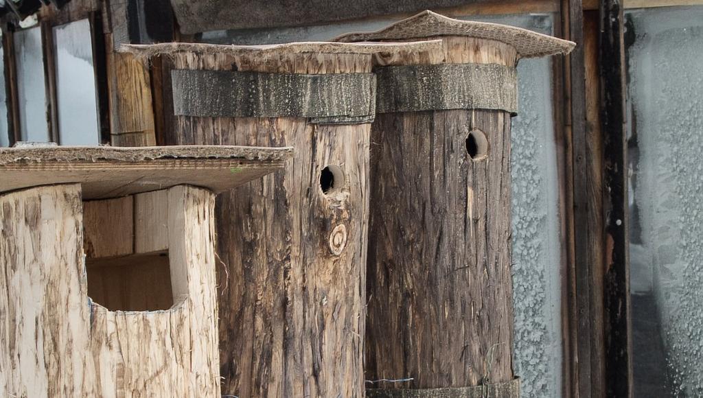 Домики для сов могут появиться в лесах под Тверью - новости Афанасий