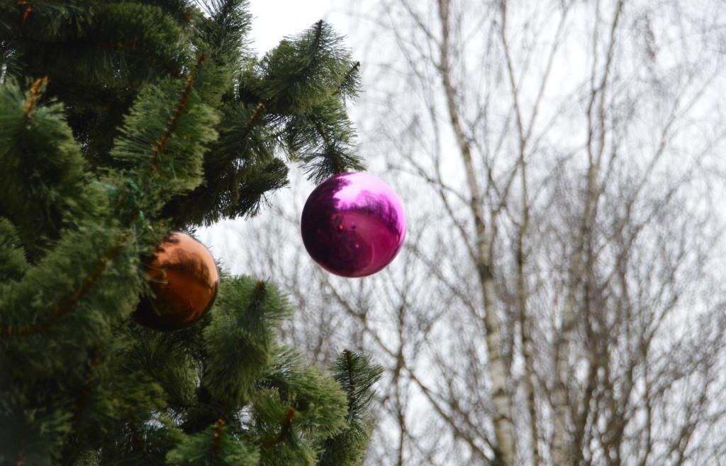 Елки 2021. В Твери установили первое новогоднее дерево - новости Афанасий