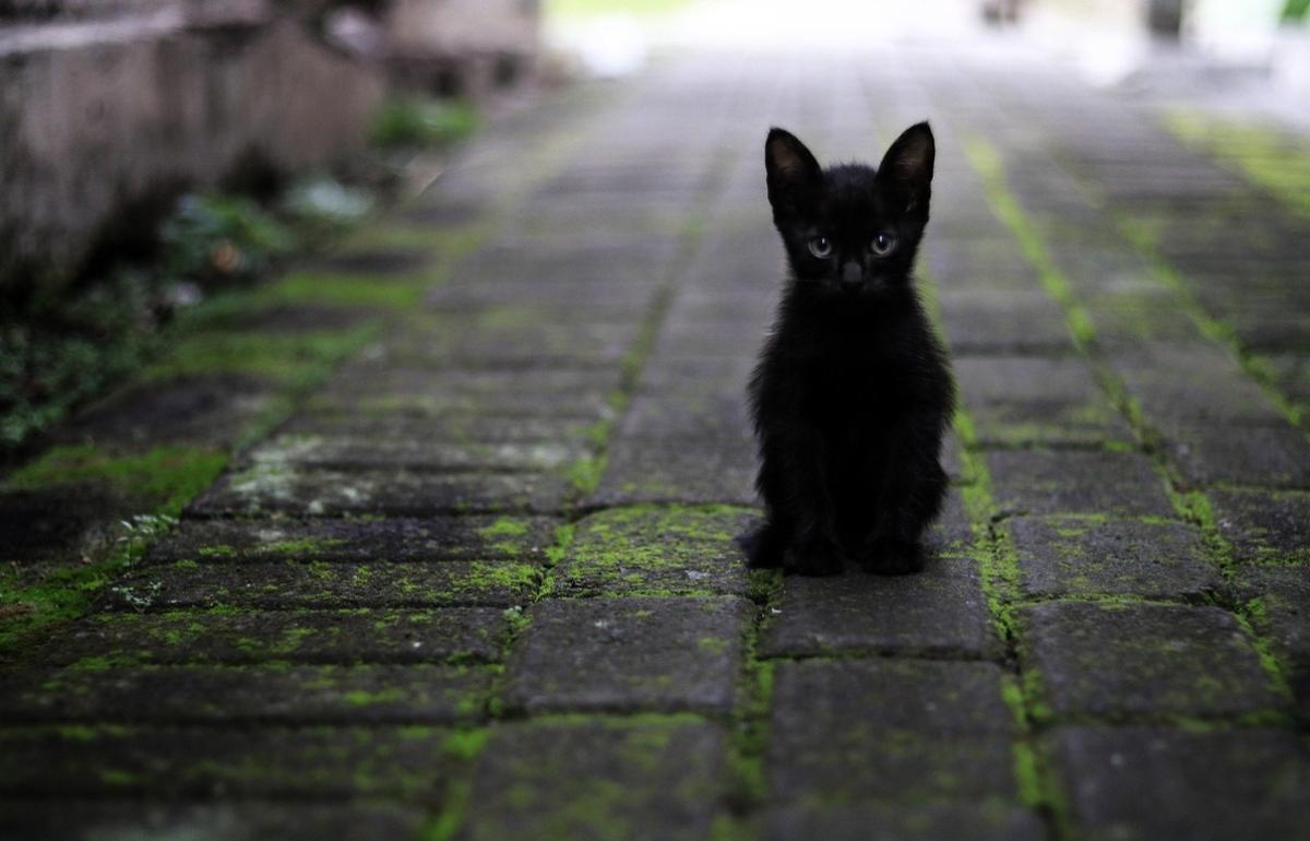 Прокуратура начала проверку по поводу убийства котят молотком в Тверской области - новости Афанасий