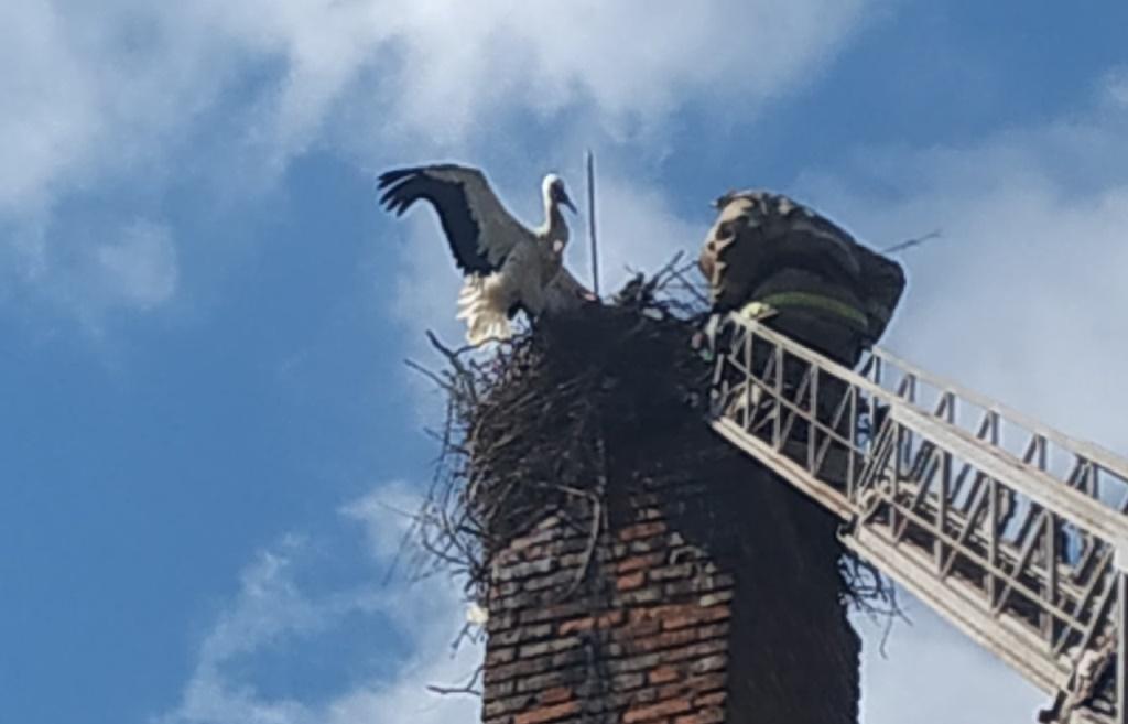 Фото спасения аиста в Тверской области опубликовало МЧС - новости Афанасий