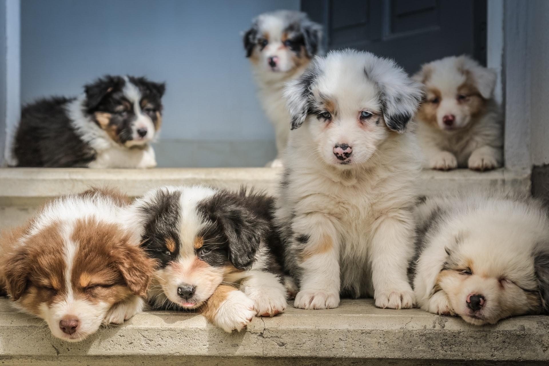 В России готовится запрет на продажу животных в зоомагазинах и на рынках