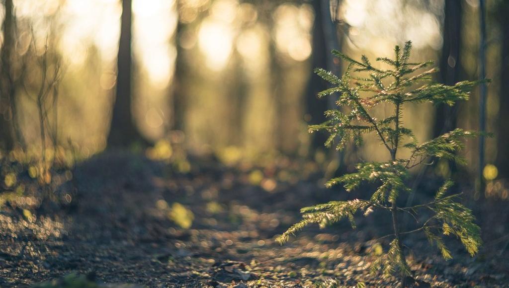 Границы еще семи особо охраняемых природных территорий определили в Тверской области - новости Афанасий