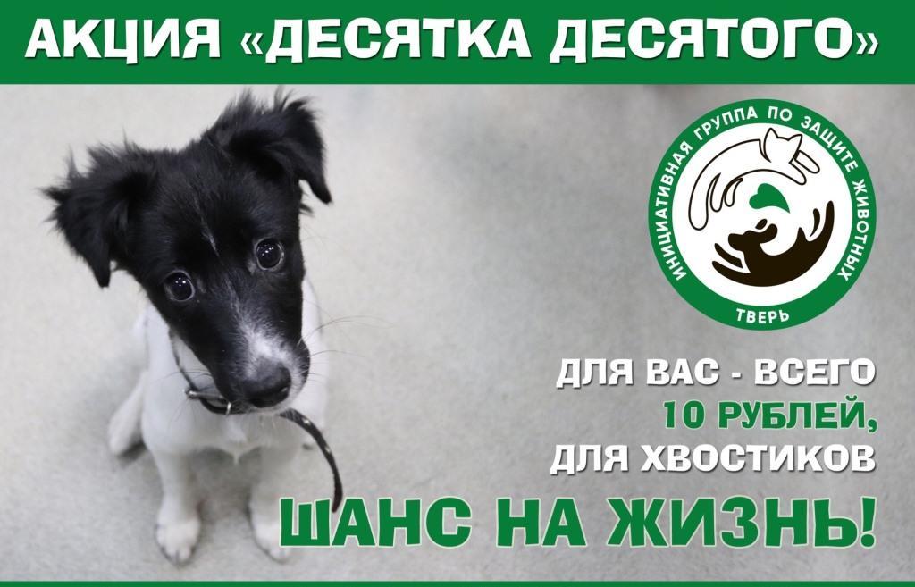 Даже 10 рублей могут помочь спасти жизнь бездомных и больных животных из Твери - новости Афанасий