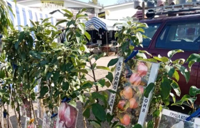 В Тверской области частник торговал саженцами без сопроводительных документов - новости Афанасий