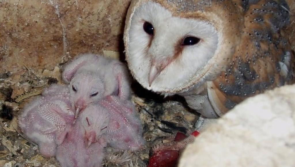 В центре реабилитации диких животных в Тверской области появились маленькие сипухи и неясыть - новости Афанасий