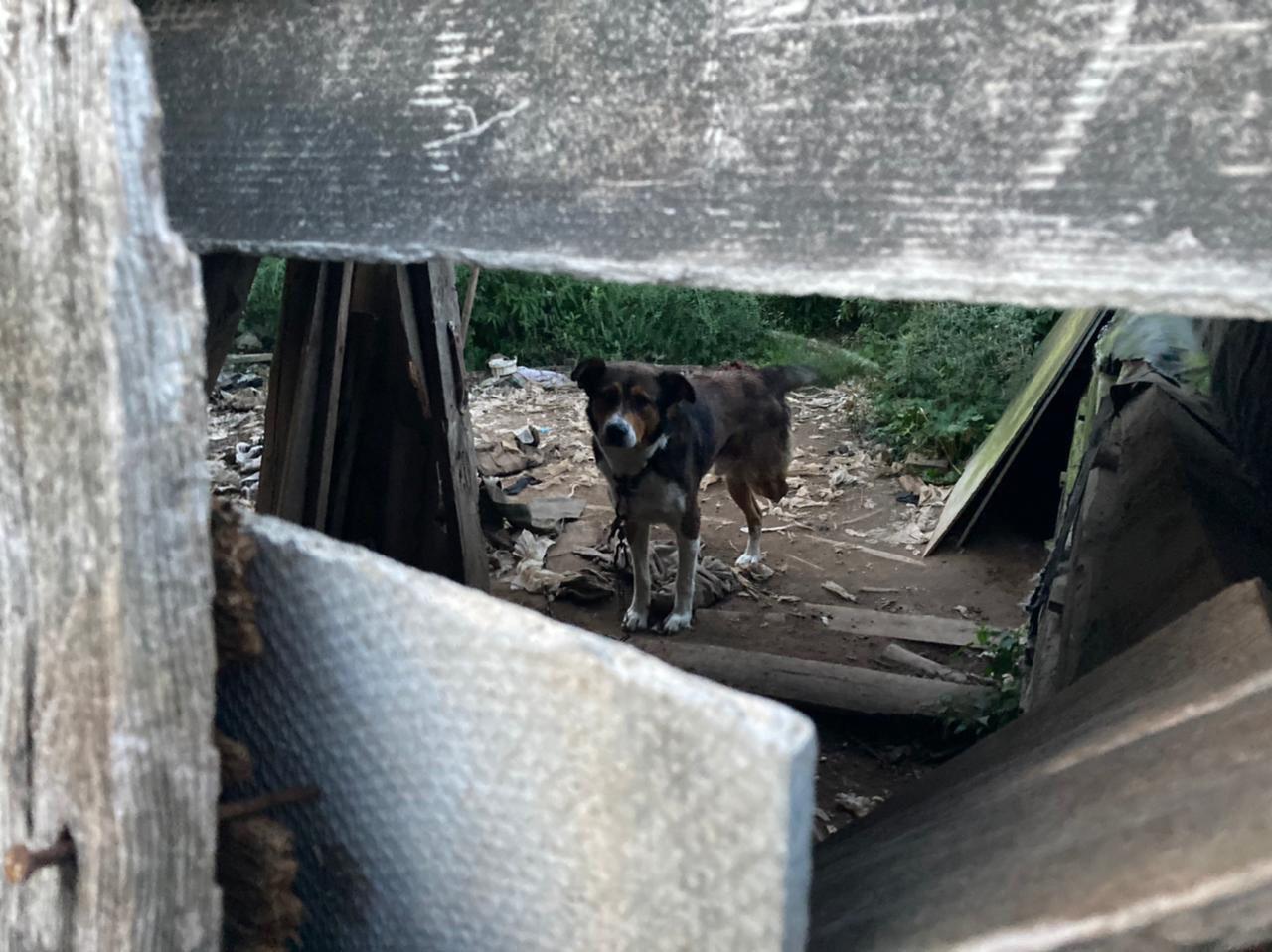 В Тверской области обнаружили очередной концлагерь для собак