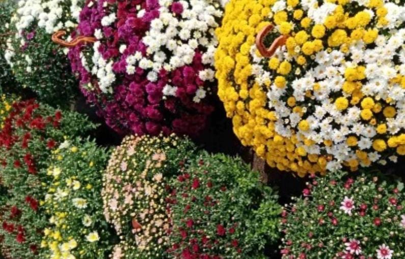 В Конаковском районе продавали неизвестные семена и саженцы без документов - новости Афанасий