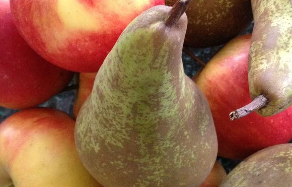 Более 33 тонн яблок, винограда, томатов и груш уничтожены в Тверской области - новости Афанасий