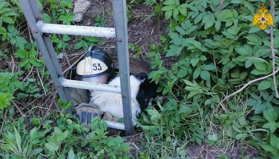 В Тверской области пожарные спасли собаку, провалившуюся в канализационный люк