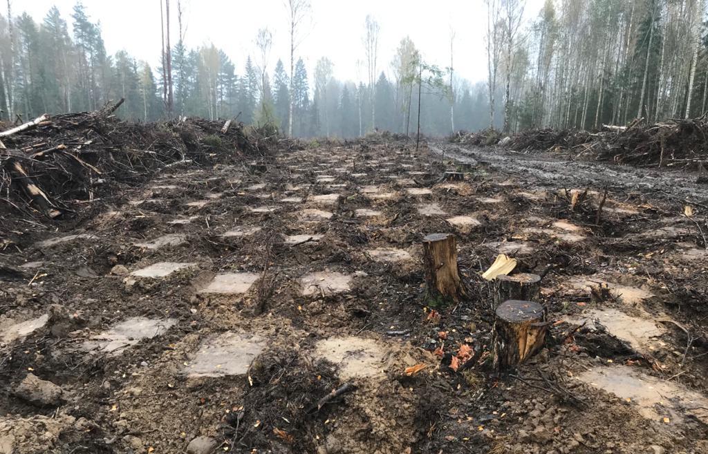 Как в Тверской области сажают лес - новости Афанасий