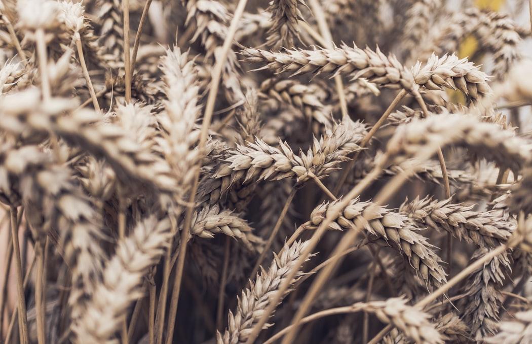 В Твери пройдет «горячая линия» по вопросам качества зерна - новости Афанасий