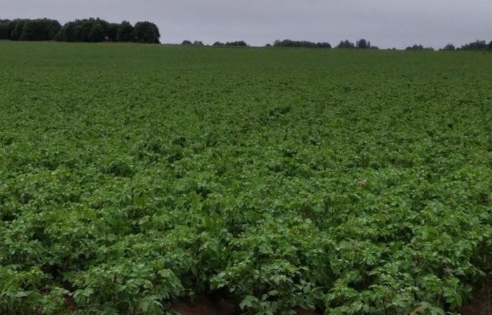 В Молоковском районе Тверской области проверили картофельные поля - новости Афанасий