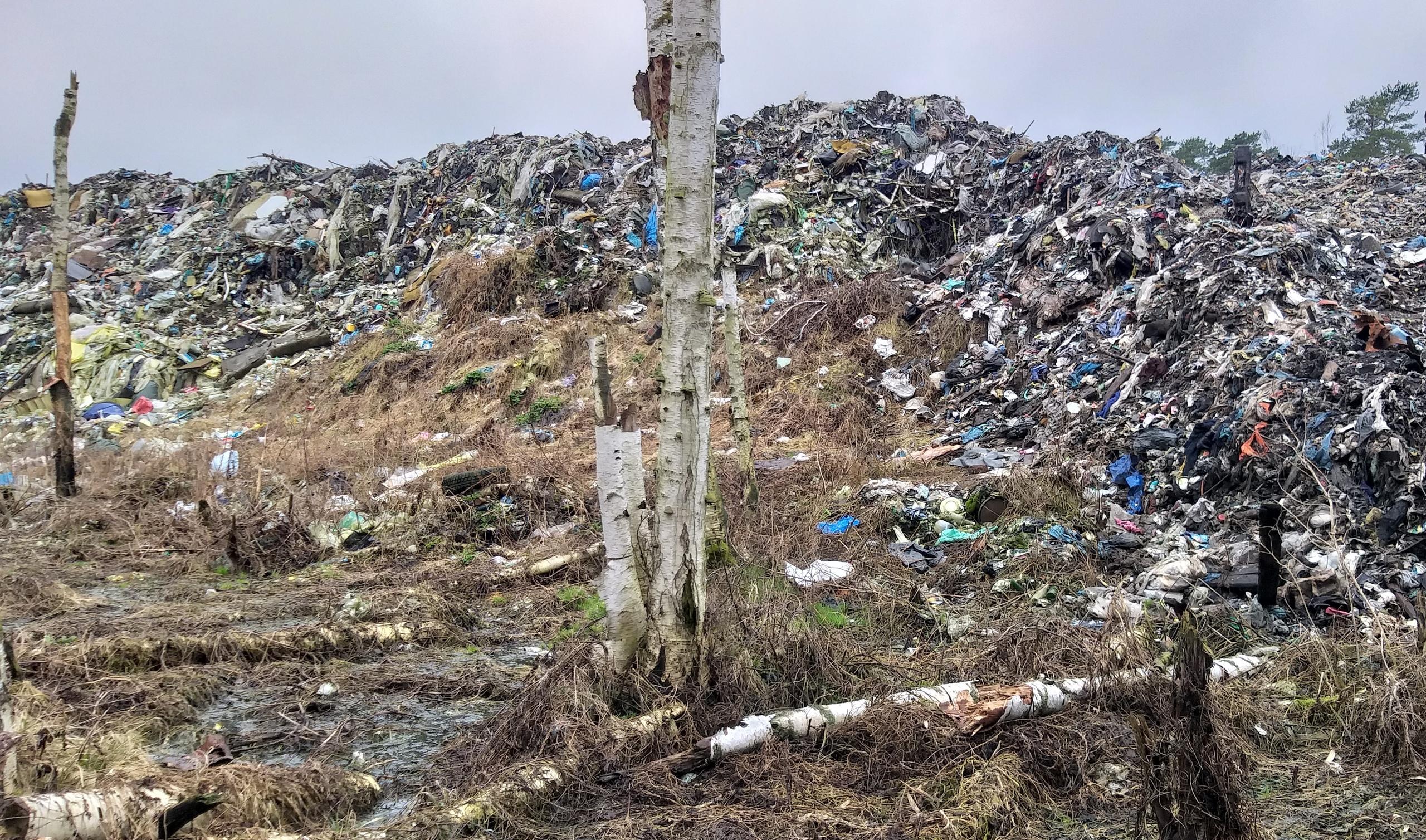 В Тверской области устроивший незаконную свалку директор компании нанес серьезный ущерб окружающей среде - новости Афанасий