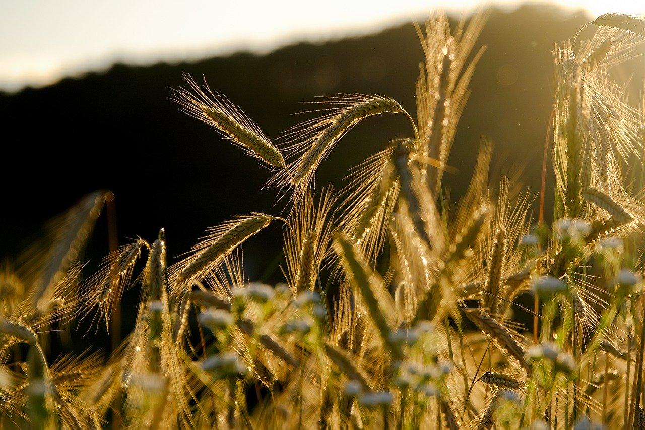 В Тверской области идет заготовка кормов - новости Афанасий