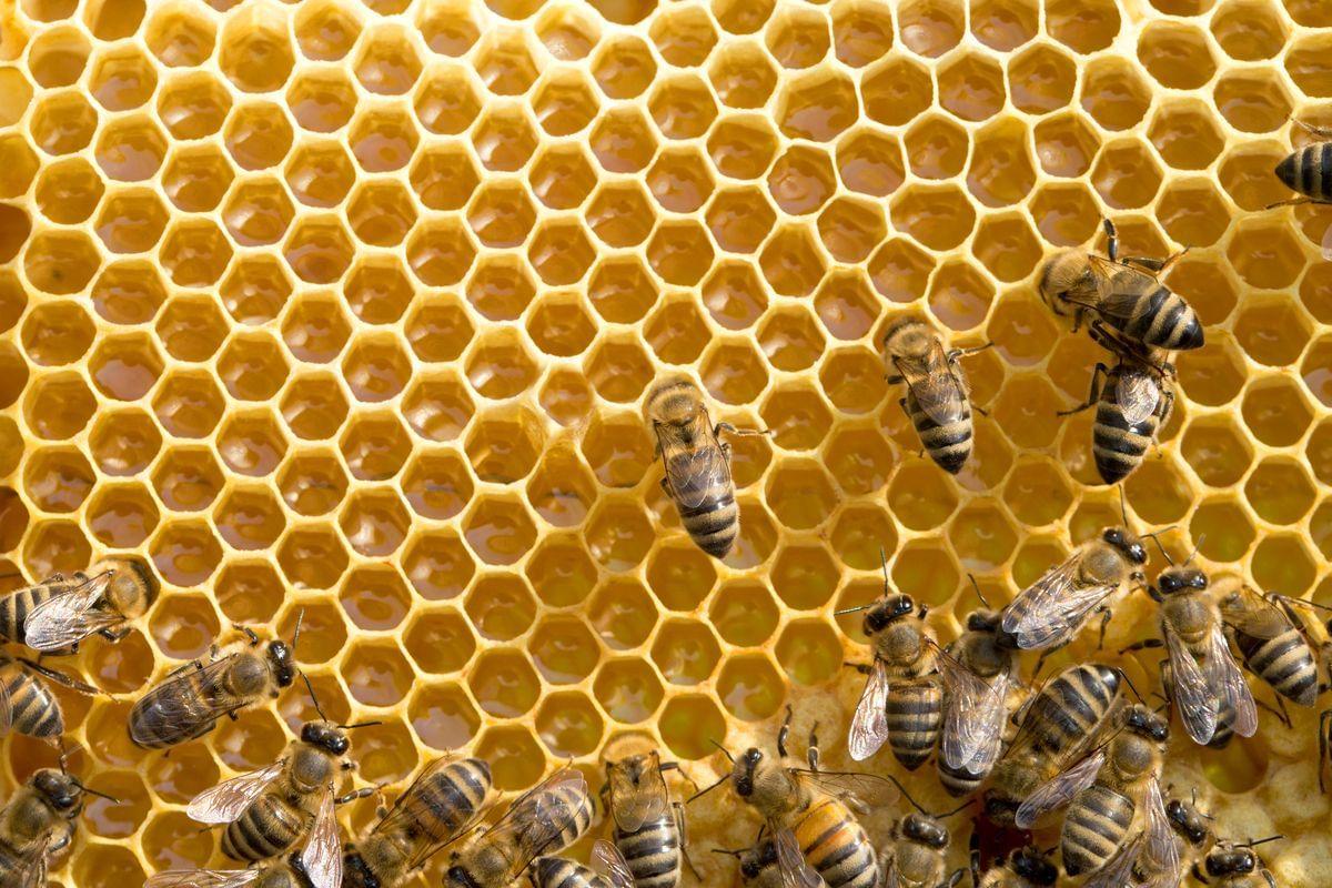 Владельцы пчел (пасек) должны соблюдать ветеринарное законодательство при их содержании - новости Афанасий