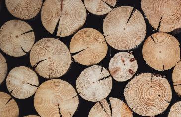 С 1 апреля древесину, отправляемую в Китай, будут обеззараживать - новости Афанасий