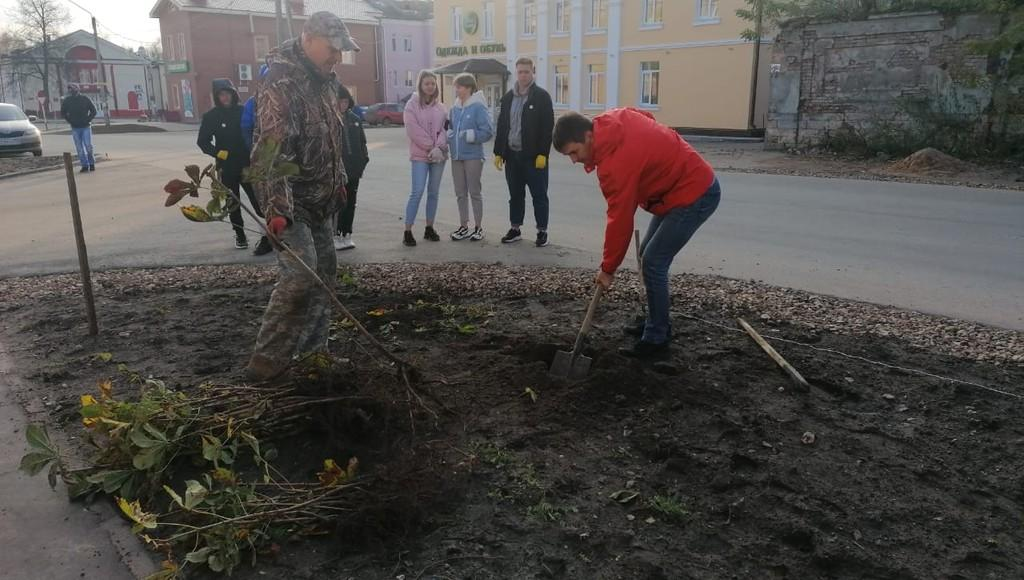 Более 600 деревьев высадили в этом году на улицах Ржева Тверской области
