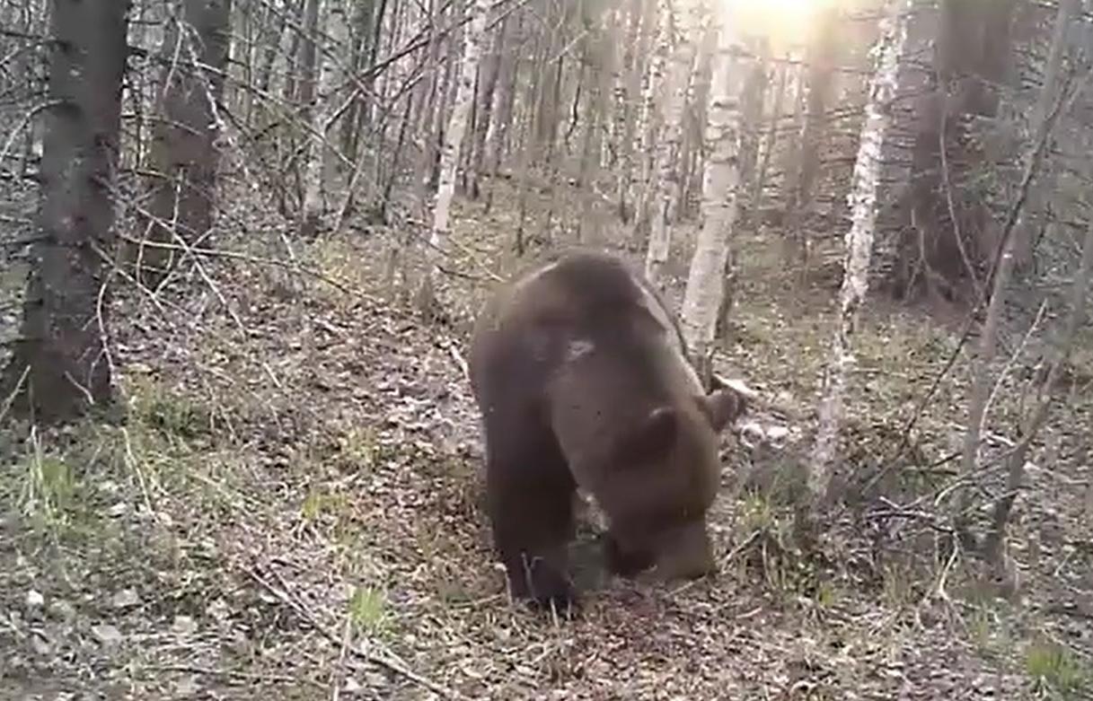 В Тверской области появился Youtube-канал про жизнь обитателей леса - новости Афанасий