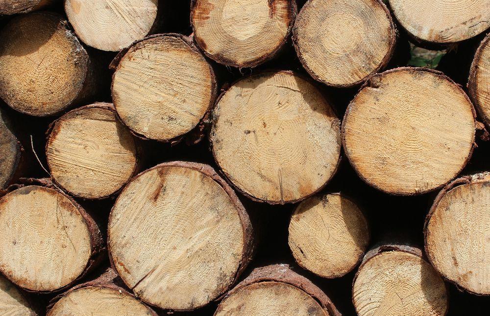 С начала года из Тверской области вывезли более 100 тысяч кубометров леса - новости Афанасий