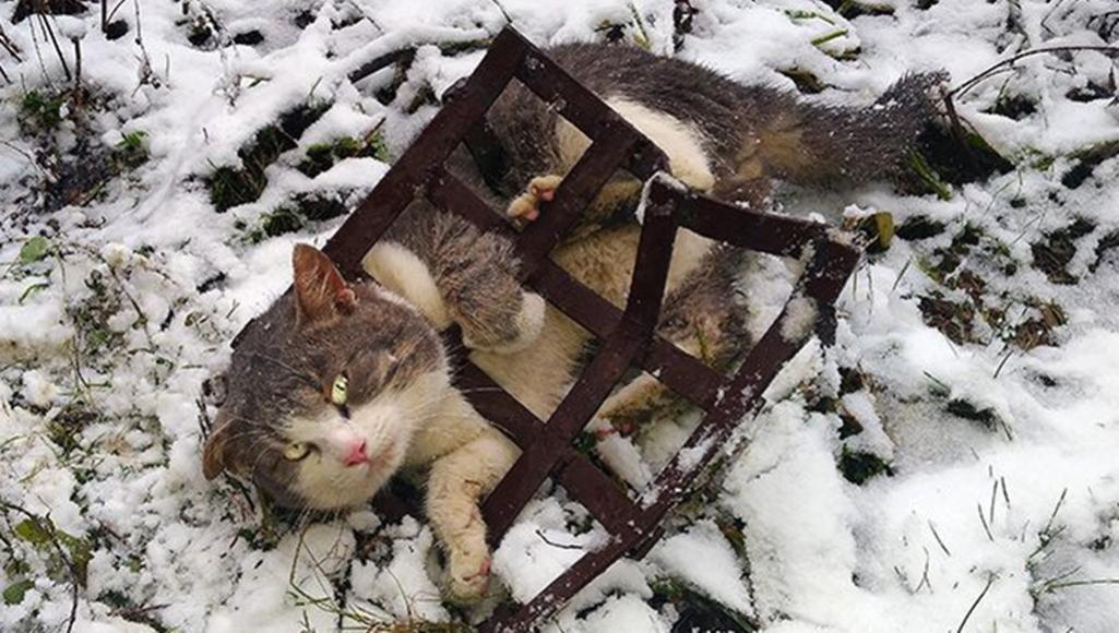 В Тверской области всем миром спасали кота, застрявшего в решетке - новости Афанасий