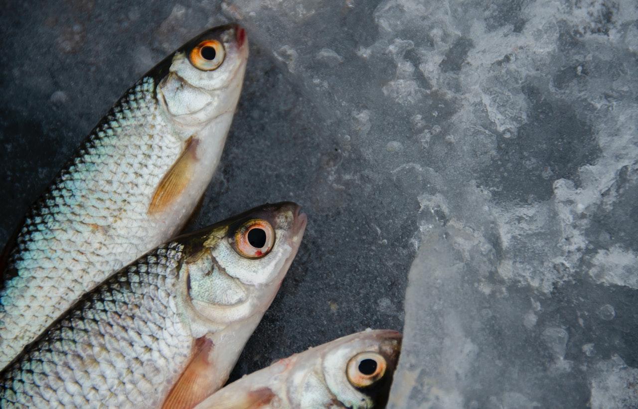 Некачественная рыба выявлена на предприятии аквакультуры в Тверской области - новости Афанасий