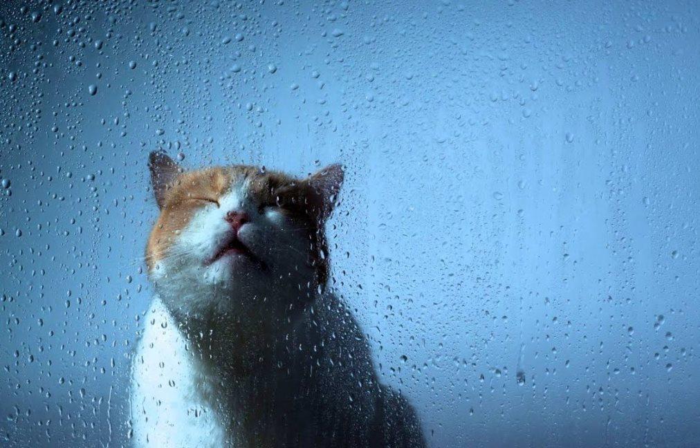 Гроза, ливень, дождь. Прогноз погоды на неделю в Тверской области