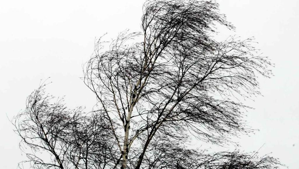 В Тверской области усилится ветер