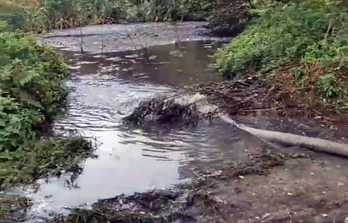 В Весьегонске Тверской области нечистоты сливают в лес