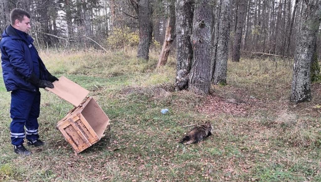 В Тверской области енота спасли из безвыходного положения - новости Афанасий