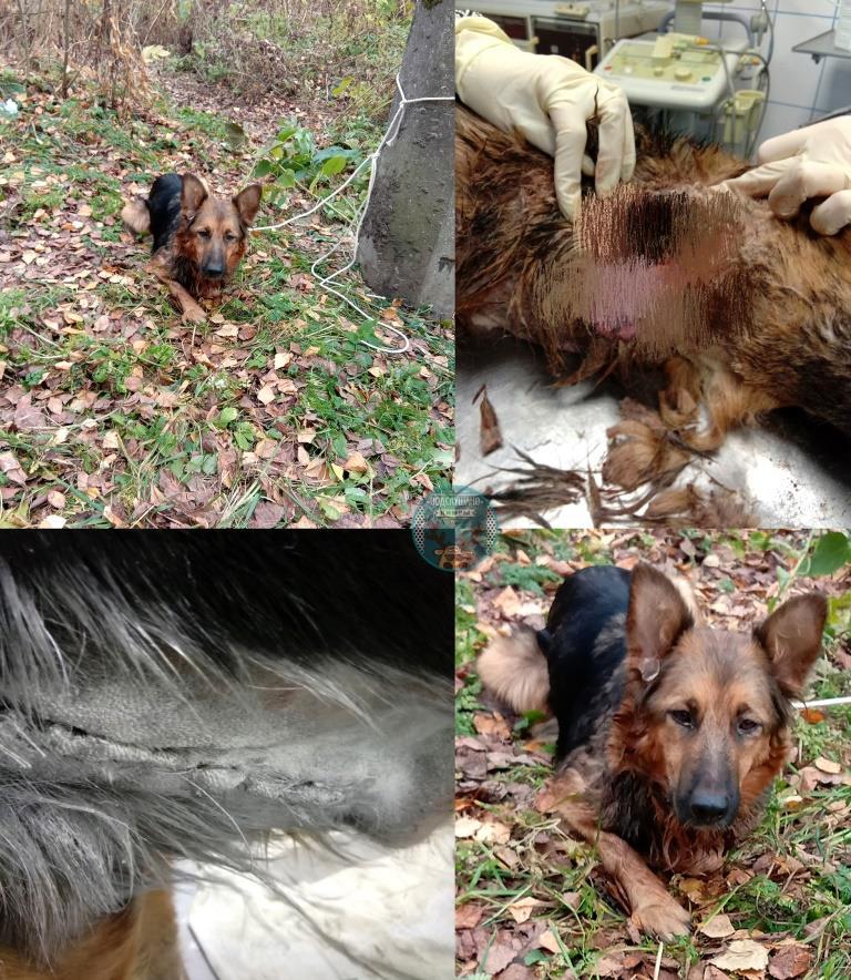 В Тверской области найден истязавший собаку живодер