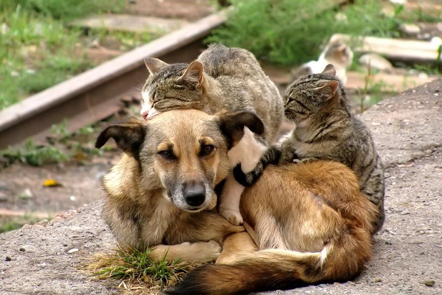 В России собираются ввести наказания за нарушение правил ответственного обращения с животными - новости Афанасий