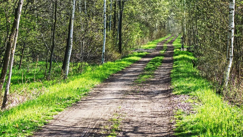 Катание на чужом квадроцикле по лесной дороге в Тверской области закончилось для подростка травмой - новости Афанасий