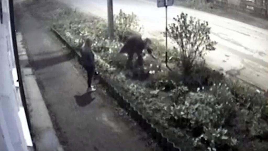 Хулиганки, оборвавшие клумбу в Осташкове Тверской области, попали на видео - новости Афанасий