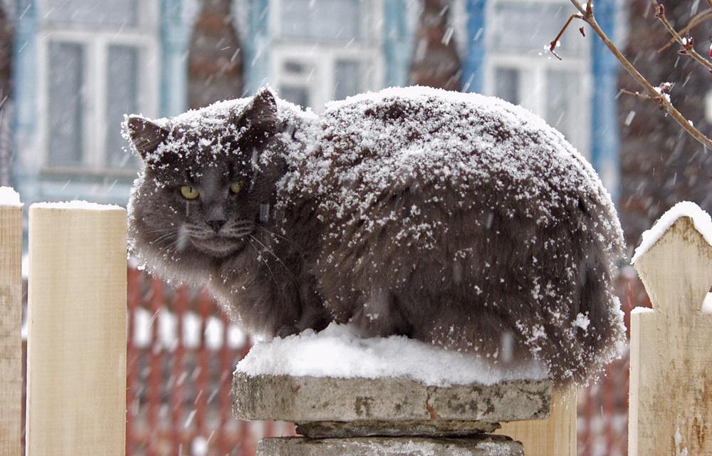 Зоозащитники Тверской области просят пускать бездомных животных погреться в подъезды - новости Афанасий