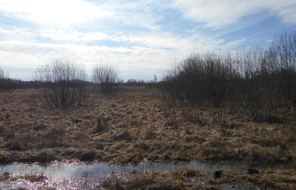 Землевладелец заплатит за лес на участке - новости Афанасий