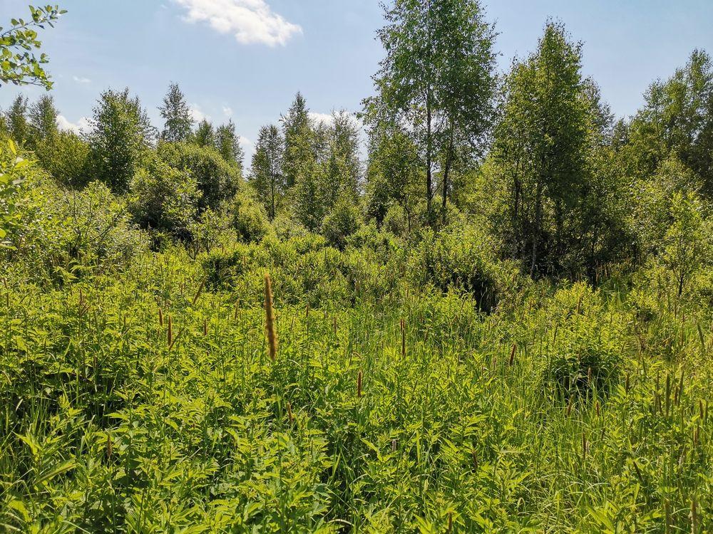 22 гектара земли заросли кустарниками