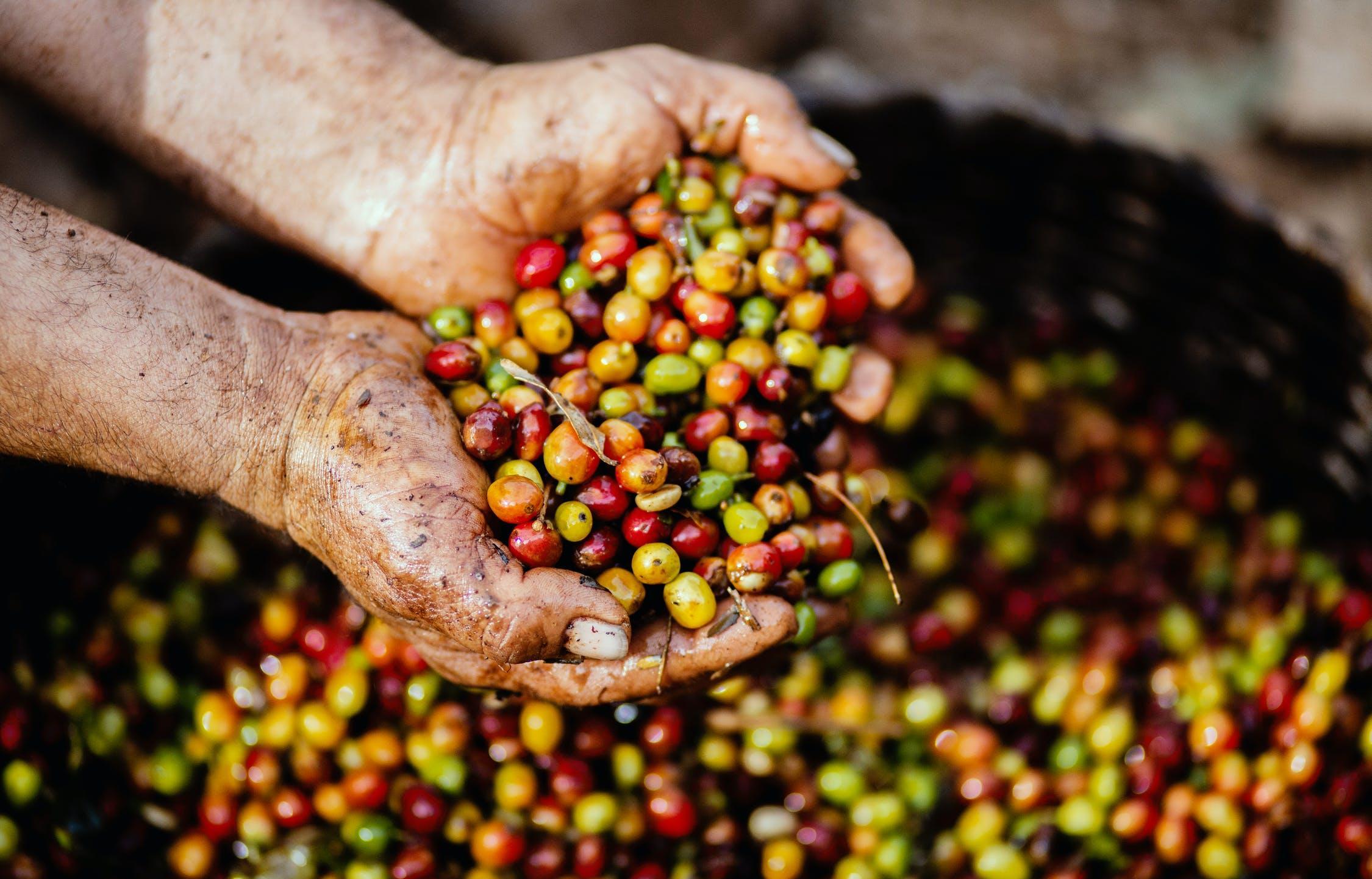 Досмотр импортных и экспортных грузов с продукцией растительного происхождения не выявил нарушений - новости Афанасий