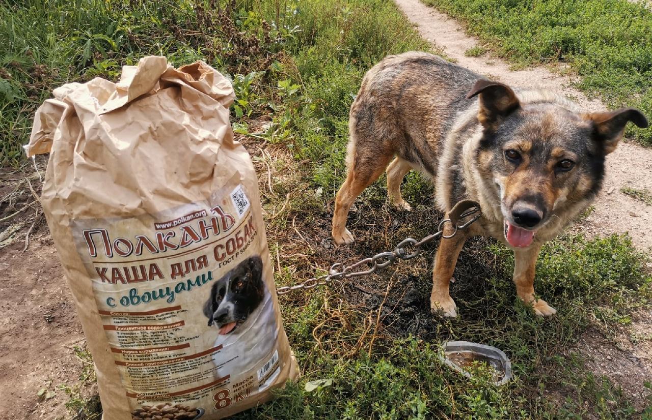 Приюту для животных «Новая жизнь» в Тверской области очень нужна финансовая помощь - новости Афанасий