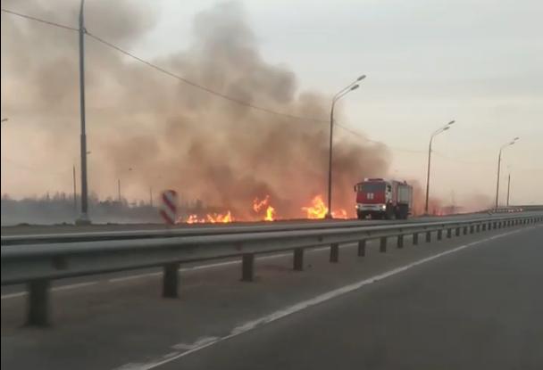 Пожарные тушат под Тверью горящий возле трассы М10 сухой камыш - новости Афанасий