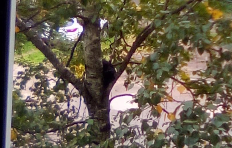 В Твери спасли кота, который двое суток провел на дереве