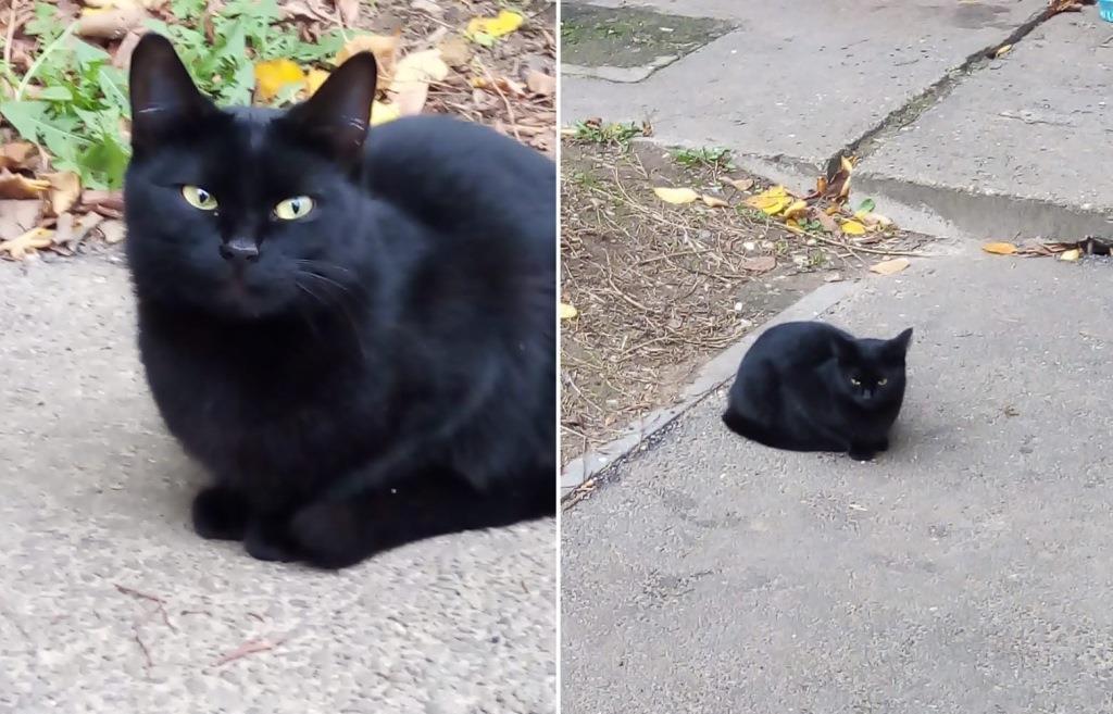 Жительница Твери услышала мяуканье закопанного кота и спасла его - новости Афанасий