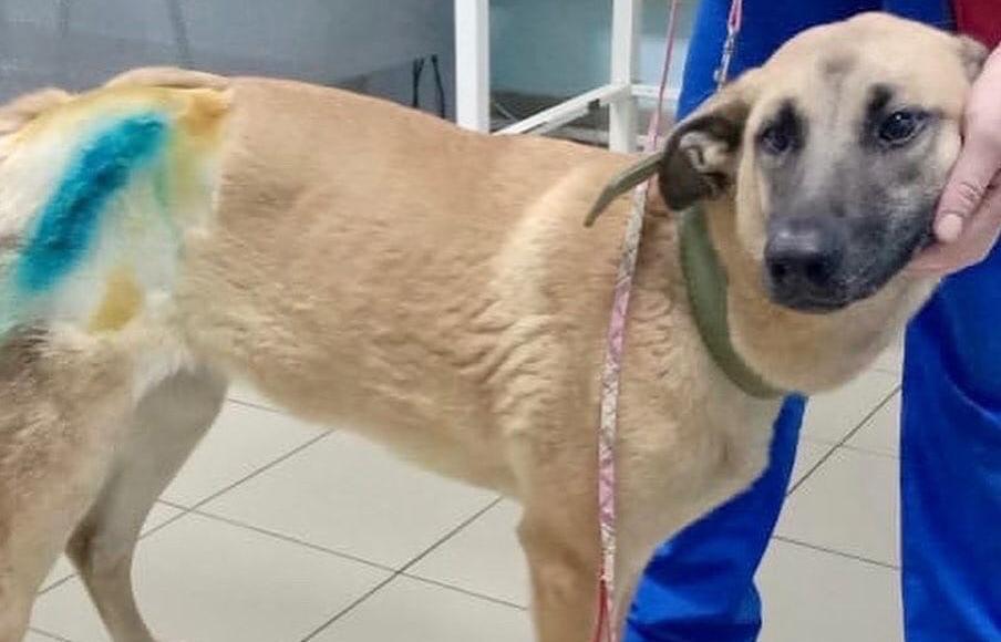В Твери суд лишил прав водителя, сбившего на дороге собаку и покинувшего место ДТП - новости Афанасий