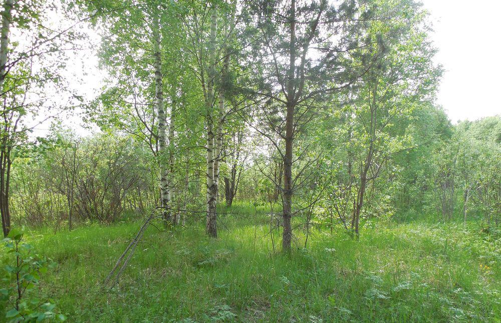 В Торжокском районе собственник не исполнил предписание об устранении зарастания сельскохозяйственных угодий - новости Афанасий