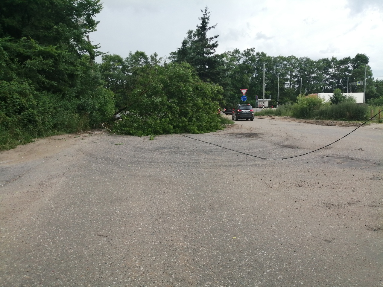 В Твери во время грозы повалило деревья в нескольких районах города