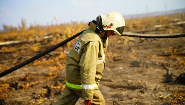 В Тверской области ликвидировали торфяной пожар - новости Афанасий