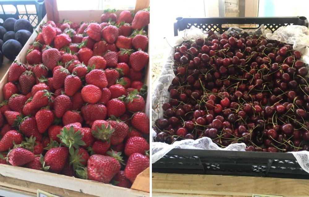 В Твери продавали подозрительные ягоды - новости Афанасий